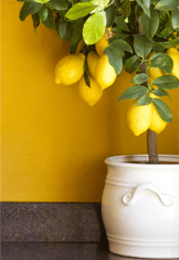 vibrant painted wall and accent decor
